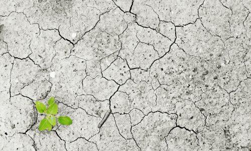 Chi ripara il danno ambientale: il soggetto colpevole e/o il soggetto incolpevole?