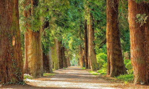 Earth Day 2021: nasce la foresta di We-learn